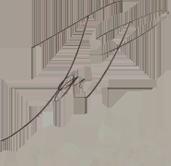 Firma-Jon Peñagarikano